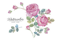 Hand drawn roses Royalty Free Stock Photos