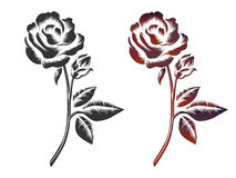 Hand drawn roses. On white background. Vector icons of black and wine color roses Stock Photography