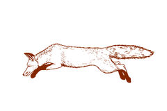 Hand drawn running fox Royalty Free Stock Photography