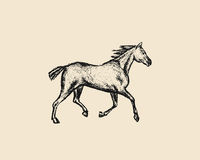 Hand drawn running horse. Vector illustration of hand drawn running thoroughbred horse. Beautiful design elements, charcoal drawing Royalty Free Stock Image