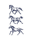 Hand drawn running horses. Vector illustration of hand drawn running thoroughbred horses. Beautiful design elements, charcoal drawing Royalty Free Stock Photo