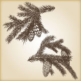 Hand drawn rustic vintage design vector elements. Forest collection of coniferous branches and pine cones  on. Brown background. Highly detailed ink art in Royalty Free Stock Images