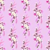 Hand drawn sakura design. Royalty Free Stock Image