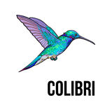 Hand drawn sapphire hummingbird, colorful sketch style vector illustration Royalty Free Stock Image
