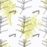 Hand drawn savory branch and handwritten sign Stock Images