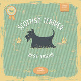 Hand drawn Scottish Terrier vintage typography poster Stock Images