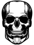 Hand drawn scull Stock Image