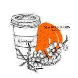 Hand drawn sea buckthorn herbal tea to go. Tea cup, berry branch. Vectror engraved art. Healing warm tea in paper cup. Food ingredient, aromatherapy, cooking Royalty Free Stock Image