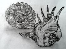 Hand drawn sea cockle-shells Royalty Free Stock Images