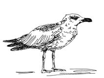 Hand drawn sea gull Stock Images