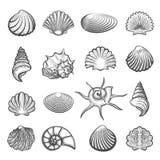 Hand drawn sea shell set Royalty Free Stock Photos