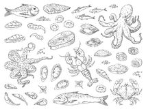 Hand drawn seafood. Octopus squid crab oyster and marine fish sketch drawing for restaurant menu. Vector sea meal