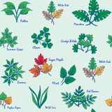 Hand Drawn Seamless Leaves Icons Stock Photo