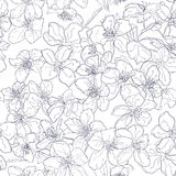 Hand drawn seamless pattern background line cherry blossom. Contrast Stock Image