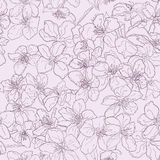 Hand drawn seamless pattern background line cherry blossom pink. Eps10 Royalty Free Stock Images