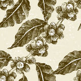Hand drawn seamless pattern with coffee pant Stock Images