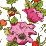 Hand drawn seamless pattern of color dog rose flowers, berries and foliage isolated on a white background. royalty free illustration