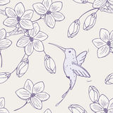 Hand drawn seamless pattern with humming bird and Royalty Free Stock Image