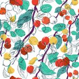 Hand drawn seamless pattern with paradise aplple sprigs in color and in graphic on a white background. Fruit vector Stock Images