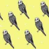Hand drawn seamless pattern with parrots stock images