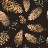 Hand-Drawn seamless pattern with pine cones and branches of coniferous evergreen tree. Design decor background. Card. Illustration Stock Image