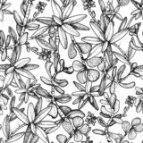 Hand drawn seamless pattern with plants succulents stock illustration