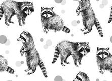 Hand drawn seamless pattern with raccoons. On white background Stock Images