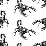 Hand drawn seamless pattern with scorpion. Background design. Royalty Free Stock Photography