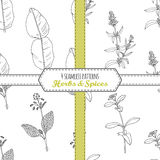 Hand drawn seamless patterns collection with kaffir lime, borage, hyssop, stevia Royalty Free Stock Images