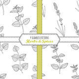 Hand drawn seamless patterns collection with melissa, mint, lavender, perilla Royalty Free Stock Photo