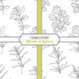 Hand drawn seamless patterns collection with oregano, tarragon, savory, cilantro. Stock Photography