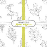Hand drawn seamless patterns collection with sage, bay leaf, basil, curry Royalty Free Stock Photo