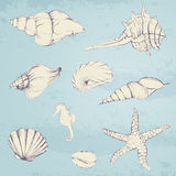 Hand-drawn Seashells Stock Photography
