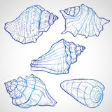 Hand drawn seashells Stock Photography