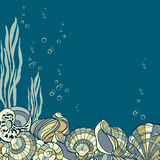 Hand drawn seashells, seaweed and bubbles card Stock Image