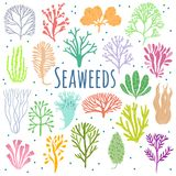 Hand drawn seaweed, coral set . Sea plant icons Stock Photography