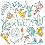 Hand drawn seaweed set. Collection of underwater plant Stock Photography