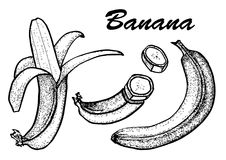 Hand drawn set of banana. Exotic tropical fruit vector drawings isolated on white background. Botanical illustration of Stock Photos