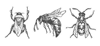 Hand drawn set of bees and bumblebee in different poses. Set of isolated vector insects illustrations vector illustration