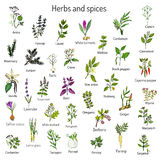 Hand drawn set of culinary herbs and spices. Vector illustration Stock Image
