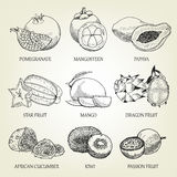 Hand drawn set of different tropical fruits. Outline realistic icons of healthy food. Royalty Free Stock Photo