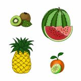 Hand drawn set of fruits. Isolated objects on white background. Elements for design royalty free illustration