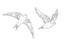 Hand drawn set of graphic isolated bird swallow on white backgro Royalty Free Stock Photo
