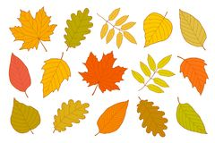 Hand drawn set of isolated autumn leaves. Hand drawn set of isolated colorful autumn leaves on white background Royalty Free Stock Photography