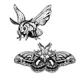 Hand drawn set of moth. Realistic sketches. Vector illustration. Royalty Free Stock Photography