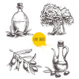 Hand drawn set of olive branch with olives, bottles with olive oil and olive tree. Royalty Free Stock Photo
