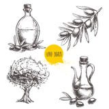 Hand drawn set of olive branch with olives, bottles with olive oil and olive tree. Sketch style vector organic food illustration Stock Photography