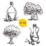 Hand drawn set of olive trees and bottles with olive oil. Stock Photos