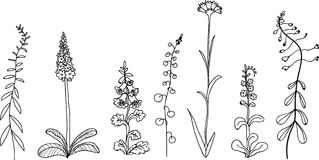 Hand drawn set of rustic plants and flowers Stock Image