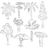Hand Drawn Set of Trees. Doodle Drawings of Palms, Sequoia, Aloe, Acacia, Ceiba  in Sketch Style Royalty Free Stock Photo